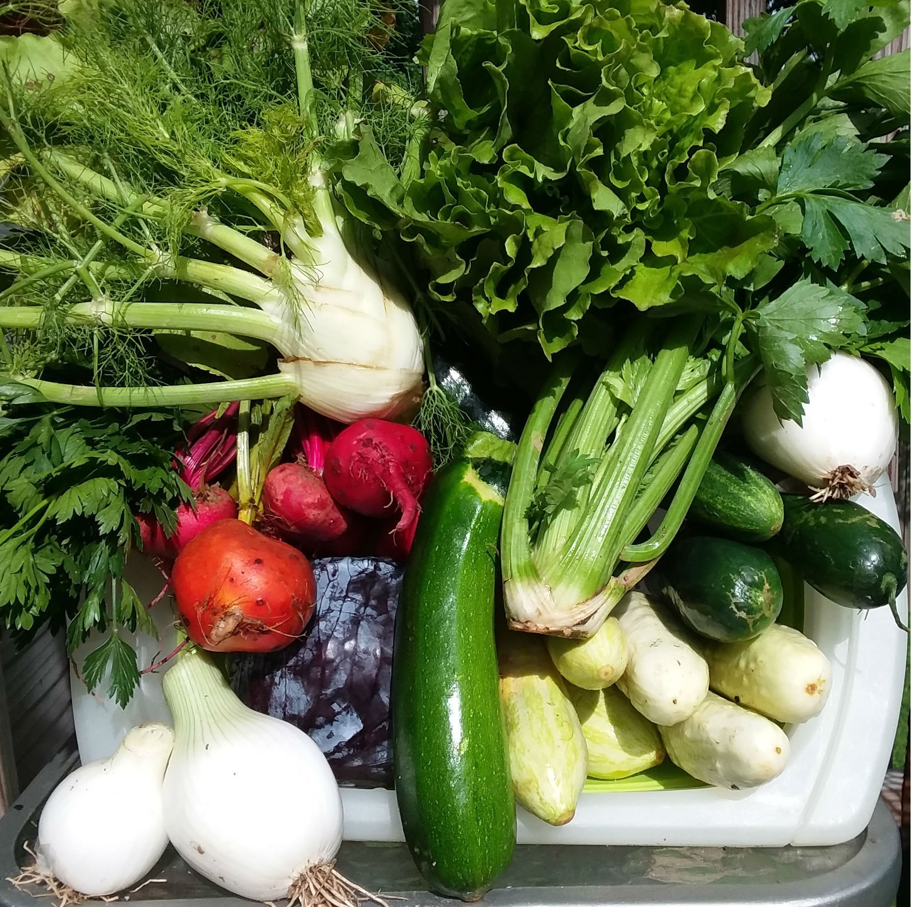CSAs Regularly Supply You with Farm Fresh Food – An All Around Win!